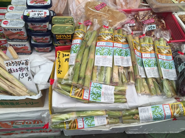 沖縄でサトウキビを食べる