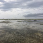 浜下りでカーミージー