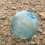 ヤンバルでアオウミガメの漂着死体とガラス玉