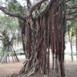 国際通りで歩き疲れたら緑ヶ丘公園で休息を。