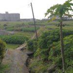 宜野湾市大山のター芋畑を子供と散歩