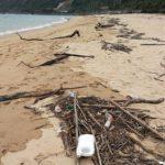 5月。海に落ちてた木の実いろいろ。